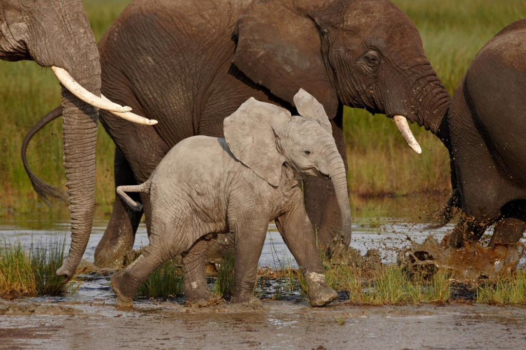 Baby African elephant, Serengeti National Park, Tanzania | © robertharding / Alamy Stock Photo