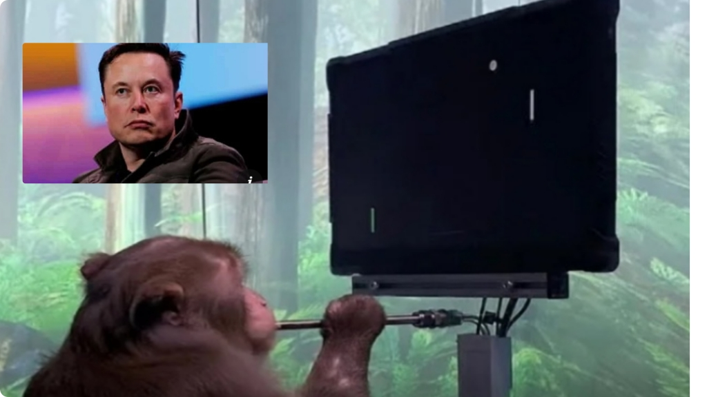 Elon Musk reveals monkey implant with chip playing